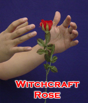 Witchcraft Rose