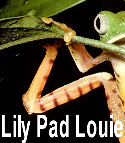Lily Pad Louie