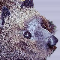 Rocky Raccoon Real Fur Spring Animal