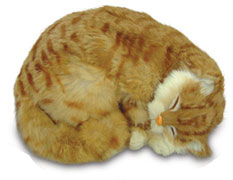 Sleeping Cat (Realistic Looking Cat)